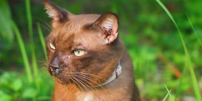 Koci katar – jakie są objawy i jak wygląda leczenie?