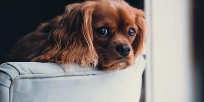 ¿Por qué mi perro ladra tanto por la noche?
