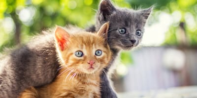 Rozwój kota od małego, czyli jak zadbać o kocięta?