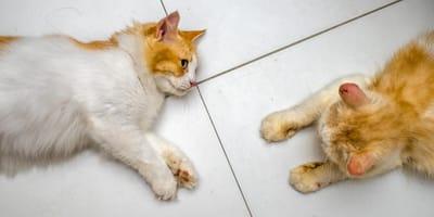 Ruja u kotki – jak ją rozpoznać i jak długo trwa?