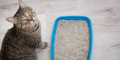 zatwardzenie u kota