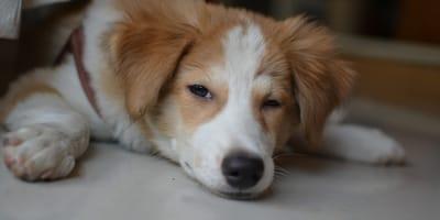 perro enfermo sintomas
