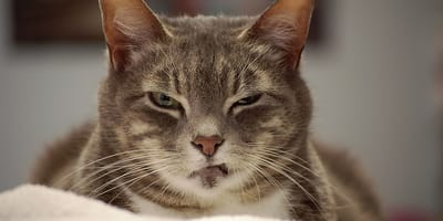 Me voy de viaje: ¿qué hago con mi gato esos días?