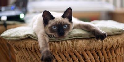 Convivenza gatto adulto e gatto cucciolo: le regole da seguire