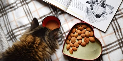 Top 6 homemade cat food recipes