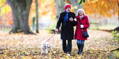 Seniorenpaar geht mit Hund im Herbstwald spazieren