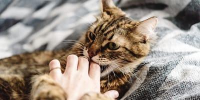 Dlaczego kot gryzie właściciela i jak go tego oduczyć?