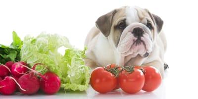 Gemüse für Hunde: Von A wie Aubergine bis Z wie Zwiebel