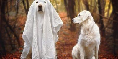 psy widzą duchy