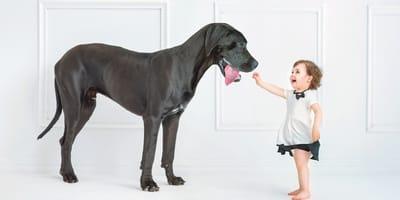 Duże psy: poznaj 11 popularnych ras psów w rozmiarze XXL!