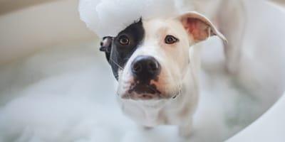 Jak często należy kąpać psa?
