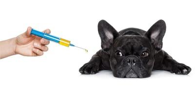 Szczepienie psa: dowiedz się więcej o kalendarzu szczepień!