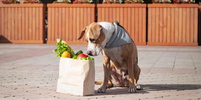 hund schnüffelt an papiertüte mit frischem gemuese