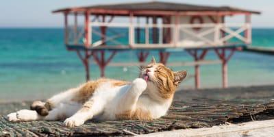 Alles rund um den Urlaub mit Katzen