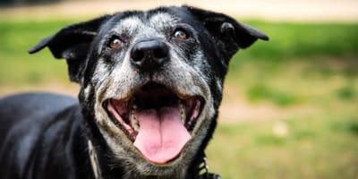 Was braucht ein Hund im Alter? 7 Tipps für Hundesenioren