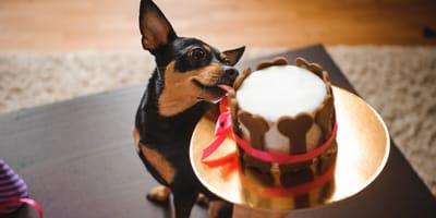 Tort urodzinowy dla psa