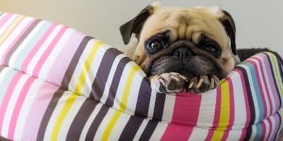 Jak zrobić legowisko dla psa samemu? Pomysły i instrukcja