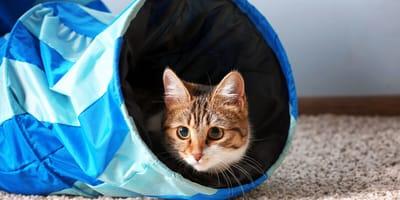 Szeleszczący tunel dla kota – jak wybrać odpowiedni i jak zrobić go samemu