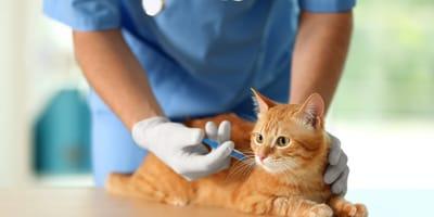 Szczepienie kota