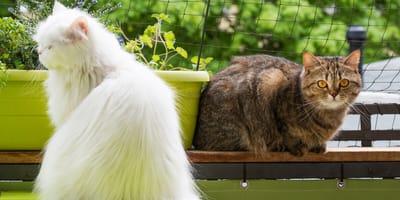 Siatka na balkon dla kota – rodzaje i zastosowanie. Jaką siatkę wybrać?