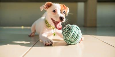 5 pomysłów na zabawy z psem w domu!