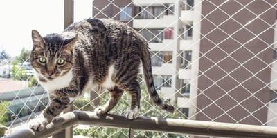 Katzennetz und Katzengitter für den Balkon