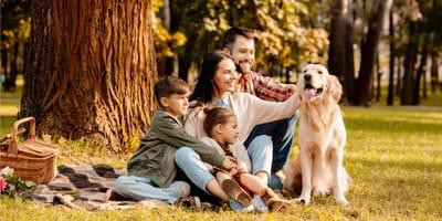Pies domowy – poznaj rasy najbardziej przyjazne dla rodziny