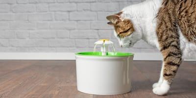 Katze trinkt Wasser am Trinkbrunnen