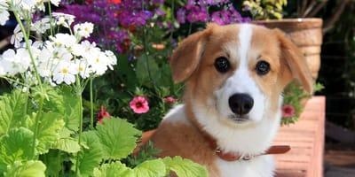 9 plantas tóxicas para perros y gatos que no debes tener en tu jardín  y ¡3 cosas que sí!