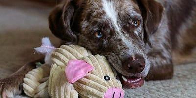 Perro jugando en casa