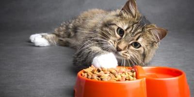 Kot z miskami