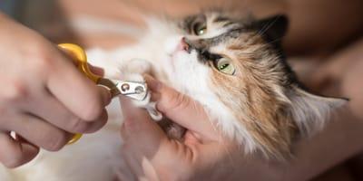 Czy obcinanie pazurów u kota jest konieczne?
