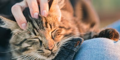 Kot ugniata łapkami Twoje kolana? Sprawdź dlaczego