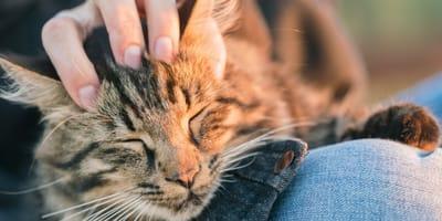 Kot na kolanach właściciela