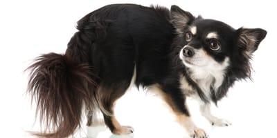 Jak oswoić psa, który się boi? Jak wzbudzić zaufanie?