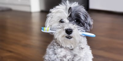 Jak wybrać szczoteczkę i pastę do zębów dla psa?