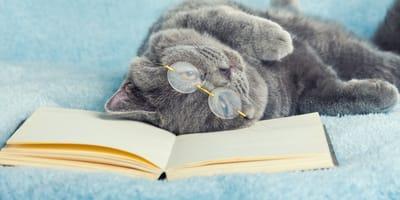 10 poemas con perros y gatos que no te dejarán indiferente...