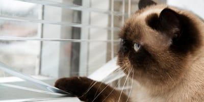 Gato sobre una mesa de madera