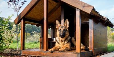 Buda dla owczarka niemieckiego lub innego dużego psa - jakie powinna mieć wymiary?