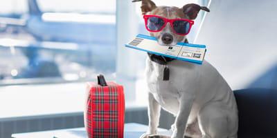 paszport dla psa