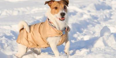 Kurtka, sweterek czy derka dla psa – co wybrać dla pupila?
