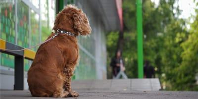 Dlaczego nie należy zostawiać psa samego pod sklepem?