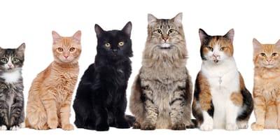koty różnych ras