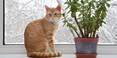 Rośliny trujące dla kota – sprawdź, czy nie masz ich w domu!