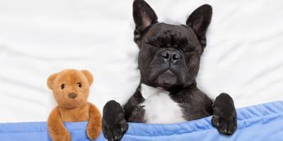 6 spokojnych psich ras -  idealnych dla dzieci i osób starszych