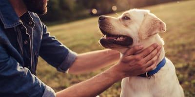 Co zrobić, aby nasz pies był naprawdę szczęśliwy?