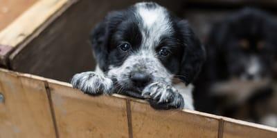 zakaz detalicznej sprzedaży psów