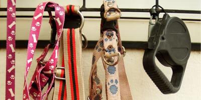 Smycz dla psa – automatyczna, do biegania. Jak wybrać odpowiedni model?