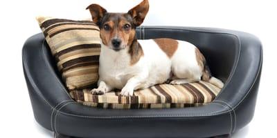 Materac, igloo czy sofa dla psa? Jak wybrać idealne legowisko?