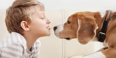 Jak wybrać idealnego pupila? Poznaj najlepsze rasy psów dla dzieci